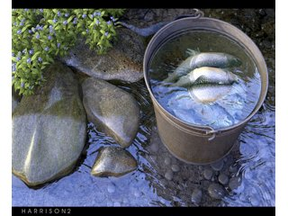Violets & Brook Trout by harrison2
